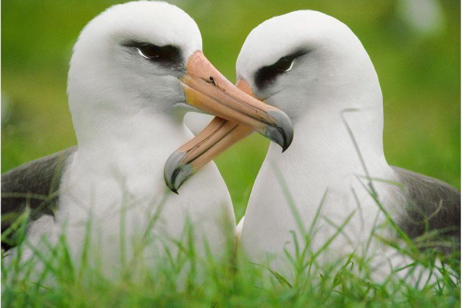 Oficiāli: Albatross būs arī 18/19 sezonā
